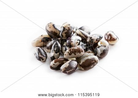 Sprouted Orca Beans