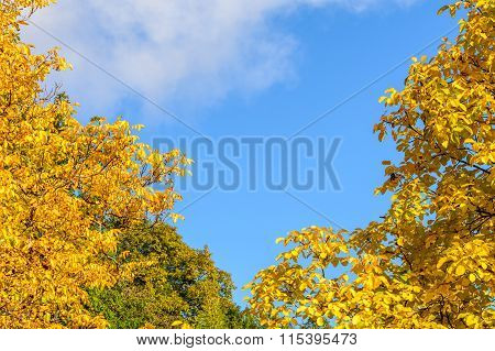 Autumn Leaves On A Clear Sky Background. Horizontal View Of Autumn Leaves In A Sunny Day, With A Bri