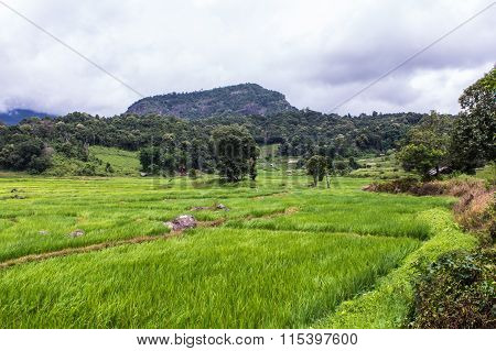 Terraced Rice Field, Pha Mon Chiangmai Thailand