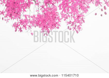 Pink flower on white background. flower hearth valentine.