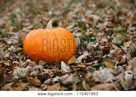 a pumpkin sitting in a yard full of leaves during autumn or fall