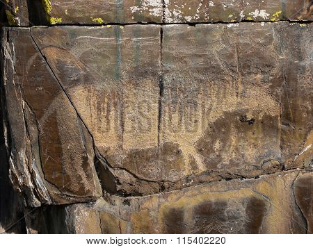 Animal Petroglyph Carved In Rocks