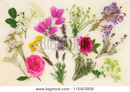 Medicinal herb and flower selection used in alternative herbal medicine over cream paper background.
