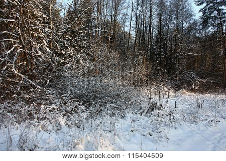 The fragment of an edge of winter forest.