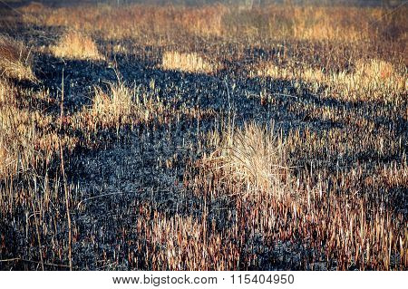 Ashes After A Fire In The Dry Grass Field, Close