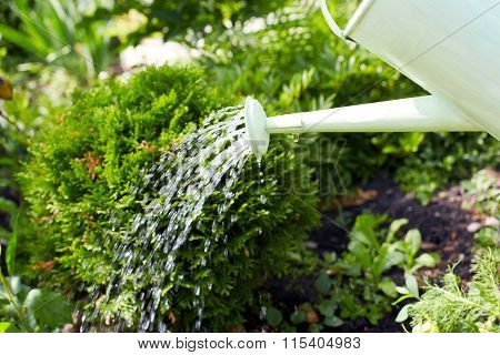 Watering Plants With A Watering Can