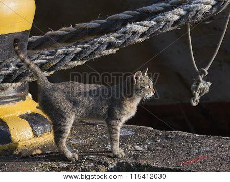 Gray-brown Cat On A Sea Berth