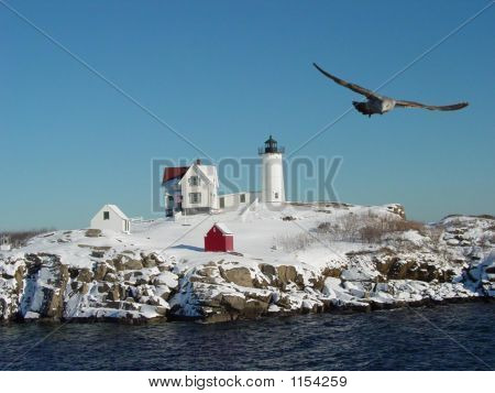 Nubble Light House And Seagull
