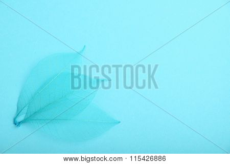 Three Blue Skeleton Leaves On Design Paper