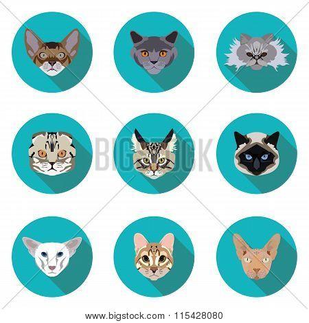 Flat Icons Set Of Pedigreed Cats