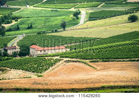 Langhe, Landscape In Piedmont (italy)
