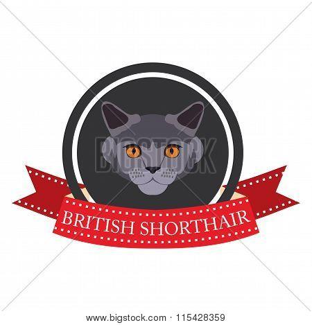 Flat Icon Pedigreed Cat British Shorthair