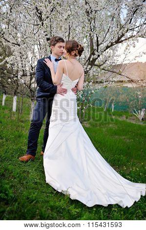 Bride And Groom Embracing In A Blossoming Spring Garden
