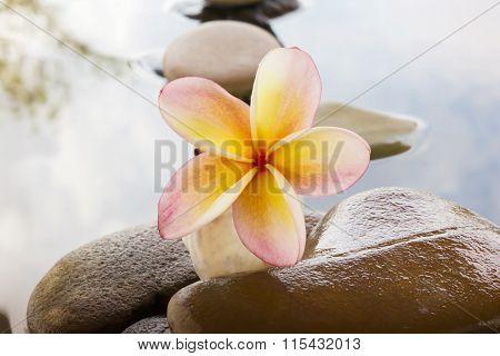 Beautiful Flower Plumeria Or Frangipani On Water And Pebble Rock For Spa Meditation Mood