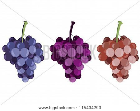 Grape. Bunches Of Grapes. Set Of Different Grape Varieties.