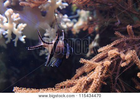 Exotic Coral Fish