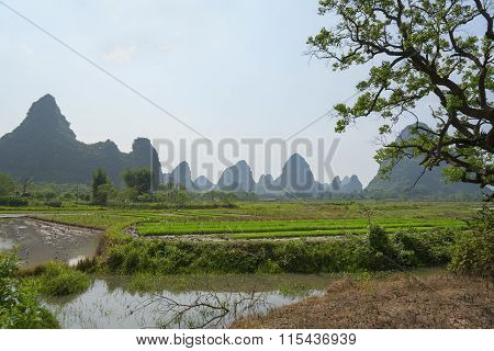 Rice Field And Mountains, China