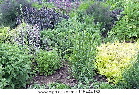 Aromatic herb garden
