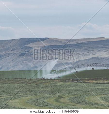 Irrigation sprinkler watering crops on fertile farm land, usa.
