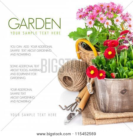 Garden flowers in wooden basket with garden tools. Isolated on white background
