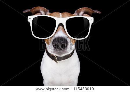 Cool Sunglasses Dog