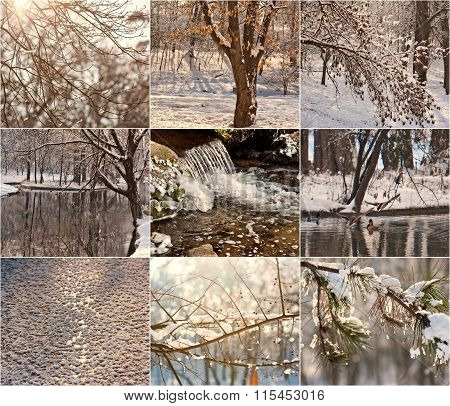Snow-covered tree branches. Robin in the snow in winter. Winter landscapes with snow