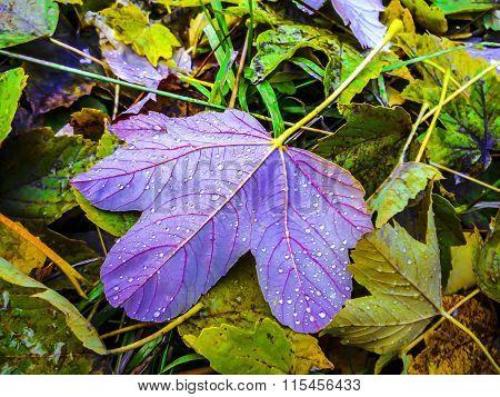 Bright Autumn Leave.