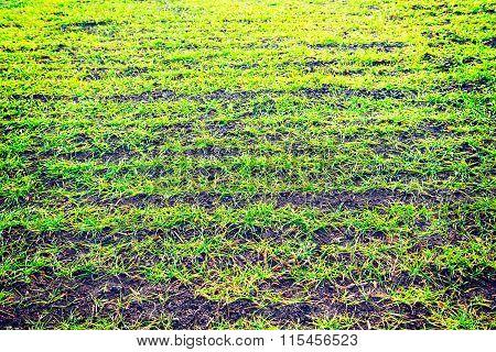 Artificial Green Grass  Nature  Ground Background