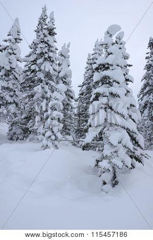 Trees December