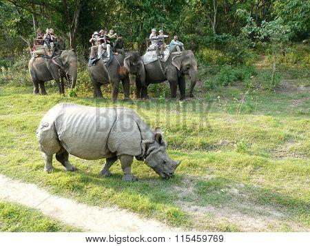 Tourists On An Elephant Safari