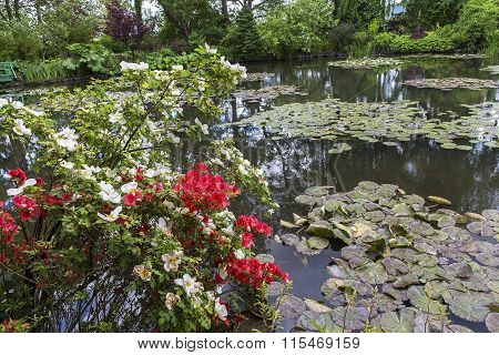 Pond, Trees, And Waterlilies In A French Garden