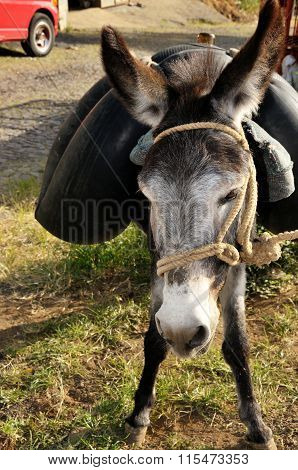 Donkey Carrying Water Tube