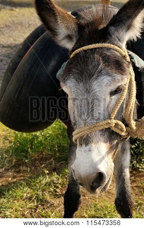 Donkey Carrying Water On Its Back