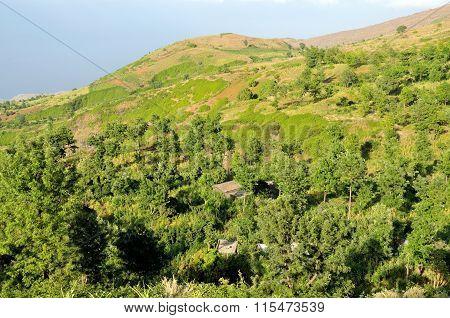 Trees In Ribeira Filipe