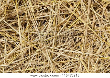 yellow straw as textured background