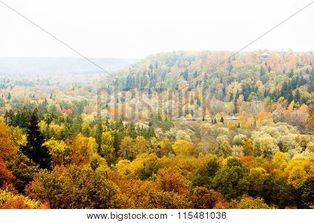 Colorful autumn forest landscape, textured background.