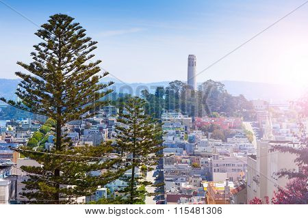 Coit Tower behind fir tree over the San Francisco