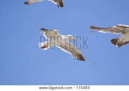 Pack Of Beach Birds
