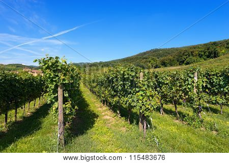 Italian Vineyards - Valpolicella Wine