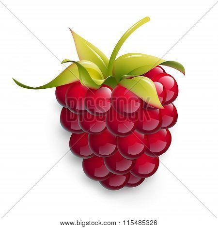 Vector illustration of ripe raspberry.