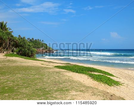 Greens at the empty beach in Weligama bay, Sri Lanka