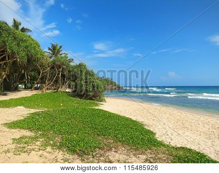 Greens at the empty beach in Weligama bay, Sri Lanka