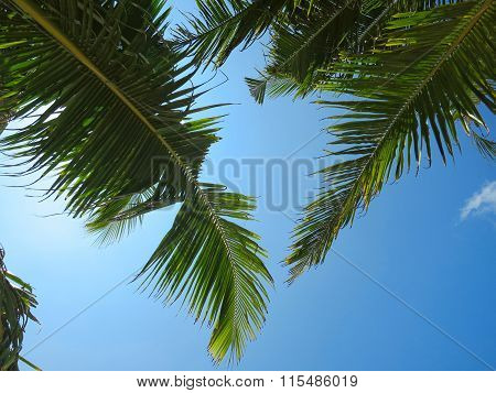 Sky view with green palm tree leaves