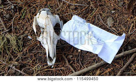 Still Life With Animal Skull