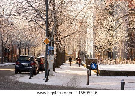 Frosty Trees Beside Walkway
