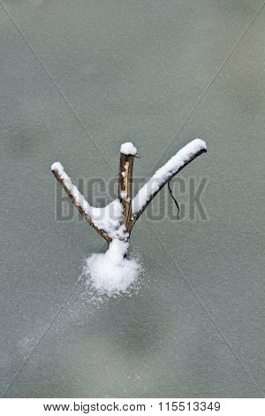 Branch Frozen In The Ice