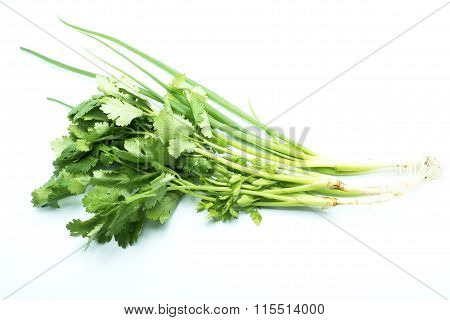 Bunch of fresh cilantro and Spring onions on white floor.