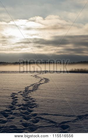 Foot Track Over The Snowy Fields, Morning Sun