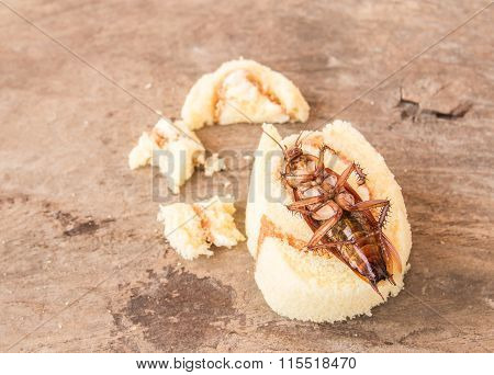 Cockroach Dead On Old Wooden Table