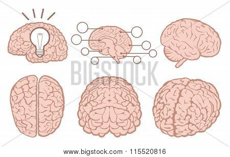 Human brain icons. Human brain icons set. Human brain icons collection. Human brain icons illustration. Human brain icons flat. Human brain icons vector. Human brain icons art. 6 Human brain icons